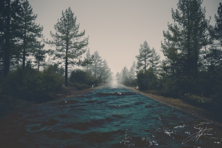 forest-haze-landscape-39811.jpg